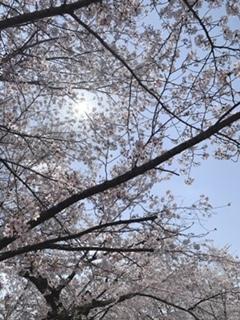 米子市皆生温泉のソープランドclubM -クラブエム-の写メ日記 散歩画像